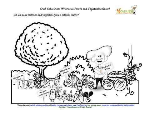 Where Do Vegetable and Fruit Plants Grow Learning Sheet