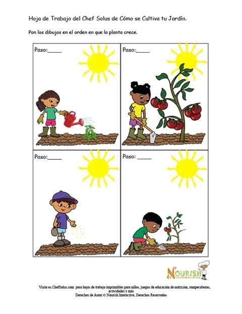 Hoja de Trabajo de Actividad de Ordenar El Jardín de Niños