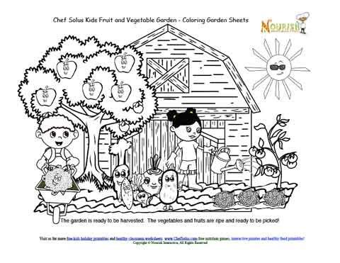 Chef Solus Kids Garden Story 8 Fruit And Vegetable Garden