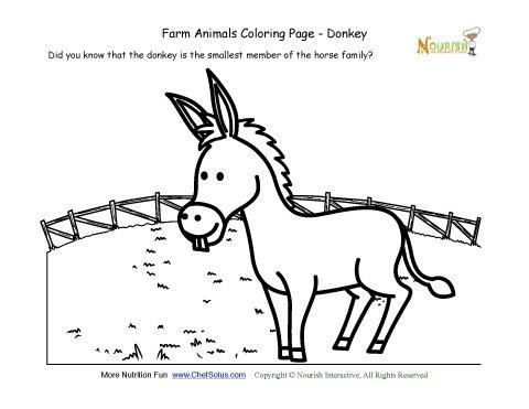 Farm Animals Coloring and Fun Fact