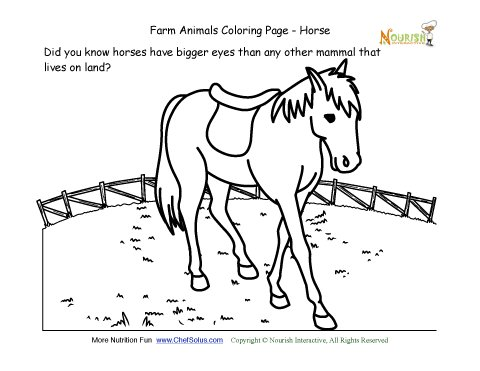 farm animals coloring and fun fact page