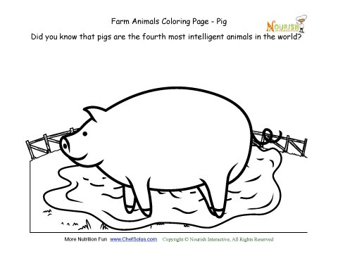 Farm Animals Coloring And Fun Fact Page Learn About The Pig